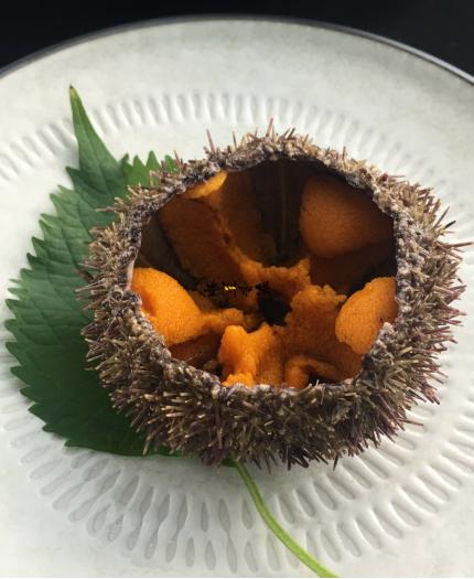 原隻活馬糞海膽 Live Green Sea Urchin (Bafun Uni)