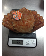 北海道熟毛蟹 (盒) Hokkaido Hairy Crab Cooked