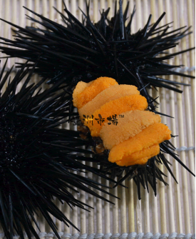 日本原隻活海膽 Japan Live Sea Urchin (Uni)