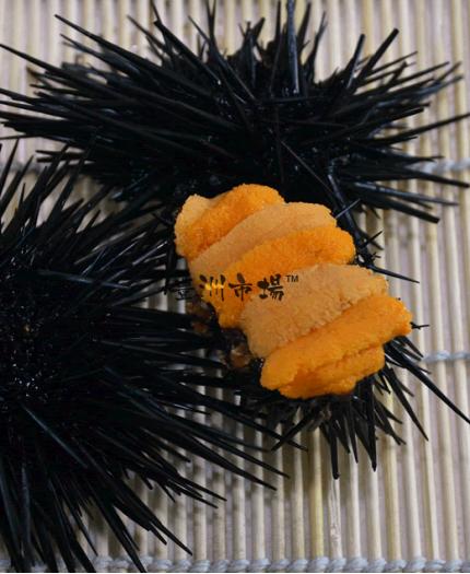 日本原隻活海膽 Japan Live Sea Urchin (Uni)