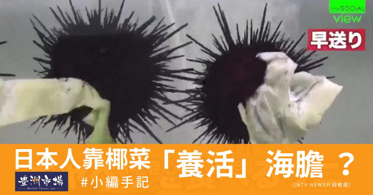 日本人靠椰菜養活海膽