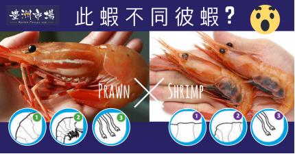 此蝦不同彼蝦
