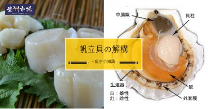 帆立貝の解構
