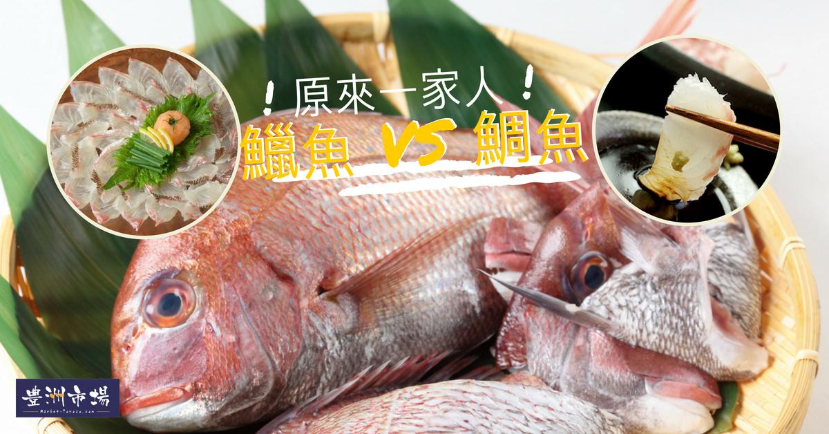 鱲魚鯛魚同屬一科魚